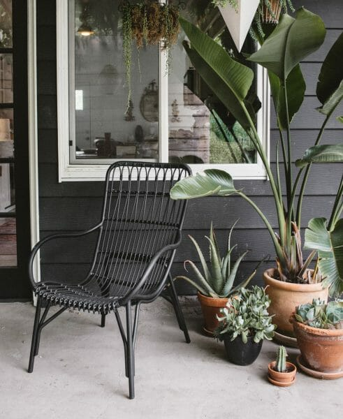 Lounge lizard, but make it jungalow. The Medan lounger looks right at home nestled amongst SF Girl by Bay's plant collection.