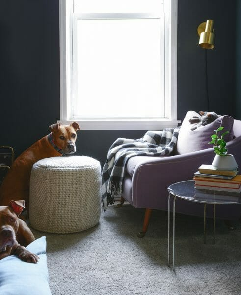 YellowBrickHome's rescue pitbull is laying claim to his favorite spot in the house: the Texa pouf in Ivory.