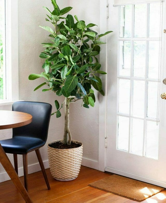 Corner of a room with a plant and Article's black Sede leather dining chair from @rootplants