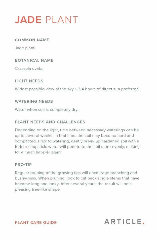 Jade plant care card