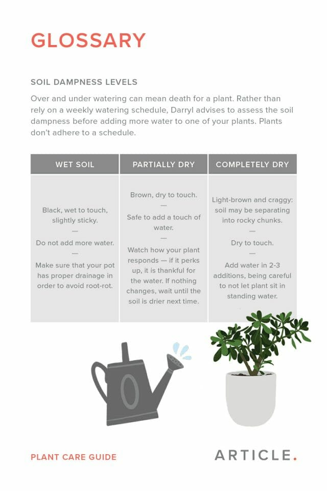 Cont'd glossary of common terms used by houseplantjournal when discussing plant care.