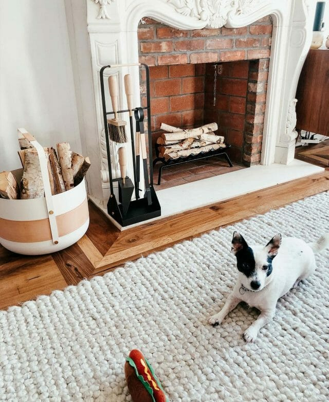 The Hira Rug is shown with a small dog